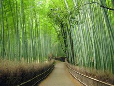 Sagano,Kyoto