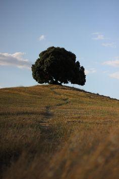 tuscany,pieve a salti buonconvento