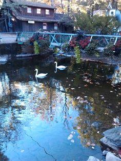 Swans Knoebels Knoebels Amusement Park, Best Amusement Parks, Little League Baseball, Local History, Swans, Virginia Beach, Norfolk, Pennsylvania, Mason Jar