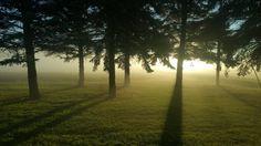 Foggy Minnesota morning taken by my wife  Wendell MN [OC] [53122988] #reddit