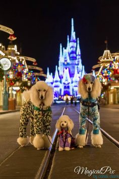 Poodles. In Pajamas. At Disney World. At Christmas. You don't get a better picture than this!