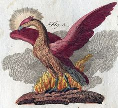 Phoenix depicted in the book of mythological creatures by F.J. Bertuch (1747-1822)