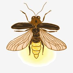 Firefly Drawing, Firefly Painting, Firefly Tattoo, Firefly Art, Firefly Serenity, Bug Tattoo, Insect Tattoo, Tatoo Art, Bugs Drawing