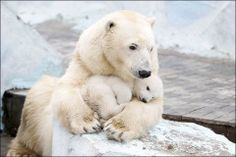 Bears are such good moms.