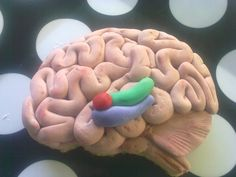I Love U with all my brain! cookie!