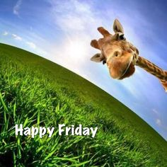 Get out there and have a great weekend! #InteractiveArt #giraffe