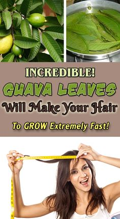 Incredible! Guava Leaves Will Make Your Hair Grow Extremely Fast!