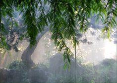 Waldstimmung - Jahreszeiten - Galerie - Community