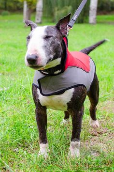 Super Warm Winter #Nylon #Dog #Coat for #English #Bull #Terrier $39.90 | www.english-bull-terrier-dog-breed-store.com