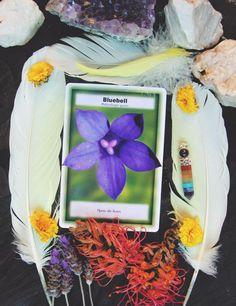 Emotional Balance & Wellbeing with Australian Bush Flower Essences.