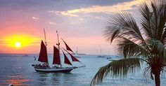 Watching the #sunset in #KeyWest #florida . . @instagram #sailboat #palmtrees #keys #ocean #westin by betchtastic