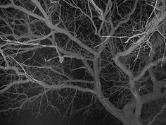 scary - looking up into the branches of my naked tree at night. But I'm scared of NOTHIN' Check this out! Bare Tree, Im Scared, Looking Up, Branches, Scary, Naked, Trees, Halloween, Night