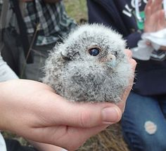 Baby Owl! Click for more