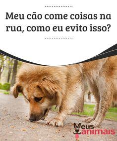 Coisas na rua, como evitar que seu cão coma tudo o que encontra  Quando levamos o nosso #pet para #passear, devemos tomar #cuidado com muitos #detalhes, porque é provável que ele coma coisas na rua. #Alimentação