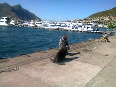 Look who came to say hello Say Hello, Westerns, Cape, Adventure, Mantle, Cabo, Adventure Game, Adventure Books