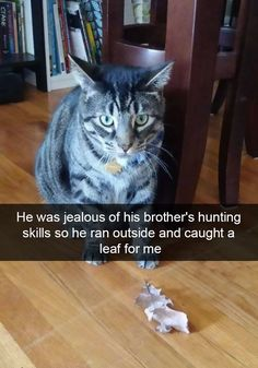 Funniest Snapchats Pictures Tickledpink Pinterest - 26 hilarious cat snapchats that need to be treasured forever