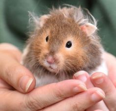Looks like Einstein, my hamster who recently passed ❤️