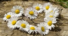 Kaikki se hyvä, mitä teet hyvällä energialla toisille, tulee sinulle takaisin. Se ei aina tule siinä siunaamassa eikä juuri siltä ihmiseltä, jota olet auttanut, mutta se tulee. Joskus, jossain muussa muodossa, jollain muulla tavalla. Luota siihen. April Birth Flower, Birth Month Flowers, Tender Is The Night, Old Farmers Almanac, Long Distance Love, Flower Meanings, Landscape Photography Tips, Living Off The Land, Finding God