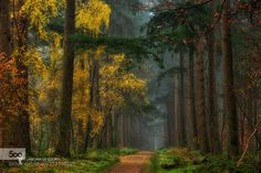 Colors of the Forest by larsvandegoor