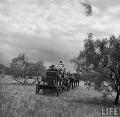 TX, Matador Ranch chuck wagon pulled by mules sets out across Texas plains behind unseen roundup crew during a cattle drive. Old Photos, Vintage Photos, Cattle Drive, Cowgirl And Horse, Texas Pride, Chuck Wagon, Cowboys And Indians, American Frontier, Texas History