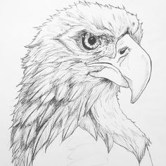 Update on my fine-feathered friend.  #Eagle #design #Art #wip