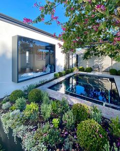 tristan_peirce Check up at The Amour for @webbandbrownneaves in Salter Point and all looking great, even in winter!  Home @webbandbrownneaves Landscape Architecture & Pool Design @tristan_peirce Landscape Construction @landscapes_wa Pool @selectpools Pool Landscape Design, Landscape Architecture Design, Pool Landscaping, Pool Designs, Perth, Landscapes, Construction, Mansions, House Styles