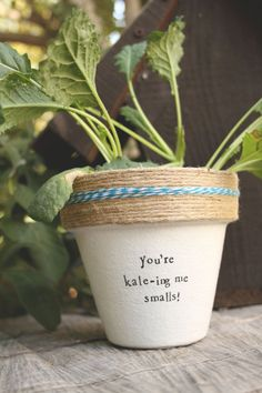 6 You're Kale-ing Me Smalls Kale Plant Indoor and Outdoor Pots, Outdoor Gardens, Compost, Kale Plant, Plant Information, Garden Crafts, Plant Crafts, Plant Projects, My Secret Garden