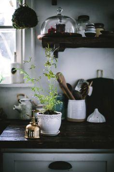 west-elm-houseplant-guide-eva-kosmas-flores-09.jpg (900×1350)