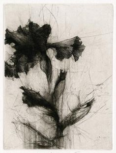 Jake Muirhead / Middlebury Irises, 2011 / etching and drypoint (two plates - 1 of 2) / 9 x 12