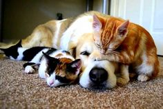 Beautiful Photos of Dogs Loving Their Baby Animal Friends