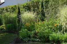 *Garten-Liebe*: Juli-Hitze... Plants, Echinacea, Berries