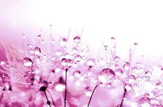 Image about girl in amazing *-* ! My Favorite Color, My Favorite Things, Lilac, Pink, Find Image, Colours, Amazing, Photography, Art