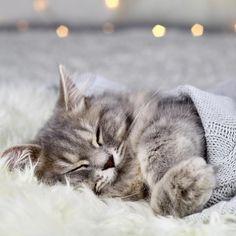 Happy Monday cuties✨ . . . . . . . . . . . . . . #Cat #Instacat #Instacats #Meow #Instacat_meows #Kitty #Kittycat #Catofinstagram #Cutecat… Happy Monday, Cats Of Instagram, Kitty, Photos, Animals, Little Kitty, Pictures, Animales, Animaux