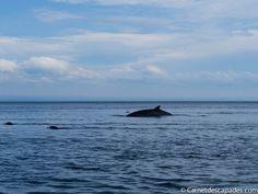 Voir les baleines dans la région du Saguenay: où, quand, comment? Voici mon avis et mon expérience avec les croisières AML.