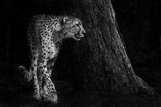Noir et blanc : Des portraits d'animaux saisissants !