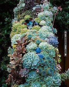 I'm a big fan of succulents & this beautiful!