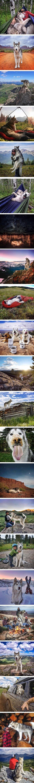 Road trip with a husky