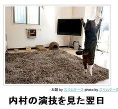 【ボケ】内村の演技を見た翌日 : ボケて(bokete)