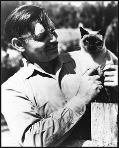 Here's Clark Gable quite a number of years later [appears to be gray on his sideburns]. I suppose it's possible that the Siamese is the same cat as the kitty from the sofa picture, or it just may be Gable chose to have another Siamese.