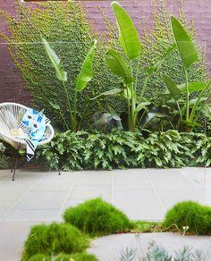 The Best 20 Garden Decoration Ideas Of 2019 Exotic Plants, Tropical Plants, Tropical Garden Design, Tree Illustration, My Secret Garden, Pool Landscaping, Back Gardens, Decoration, Garden Inspiration