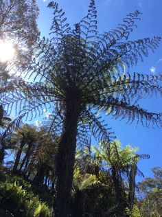 #Hiking in the #BlueMountains #Australia #travel