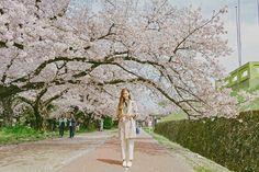 Fukuoka: Ohori-koen - Tricia Will Go Places Japan Spring Fashion, Tricia Gosingtian, Filipino Fashion, Cherry Blossom Japan, Sense Of Place, Travel Outfits, Great View, Wedding Shoot, Japan Travel
