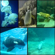 水族館。  愛知県、名古屋市、名古屋港。