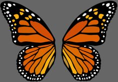 Monarch butterfly wings