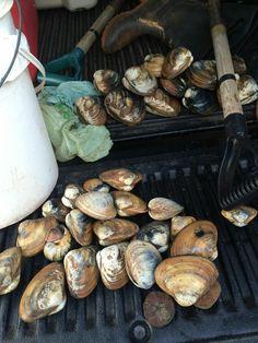 Bar clams. Clams, Stuffed Mushrooms, Bar, Vegetables, Wedding, Food, Stuff Mushrooms, Valentines Day Weddings, Seashells