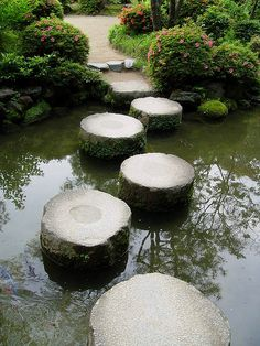Pond stepping stones
