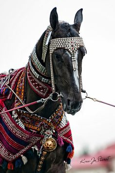 celebrating the Day of the Horse in Turkmenistan