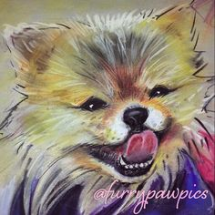 This PAW is dressed & ready to impress in his @furrypawpics portrait! He said he knows he can take the mic at #CES2015 & all PAWS will be on him!! #furrypawlife www.furrypawpics.com #PanasonicCES #electronics #petart #instaart #art #pomeranian #pompom