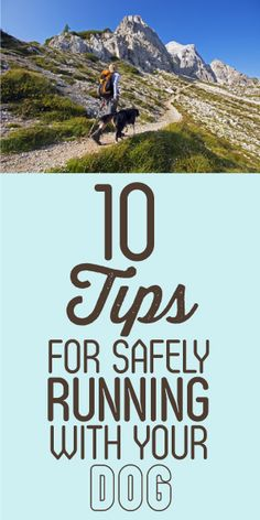 10 Tips for Safely Running With Your Dog