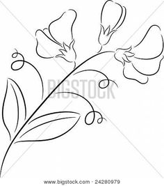 line drawing sweet pea - Google Search